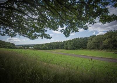Sheffield Woodland tree view