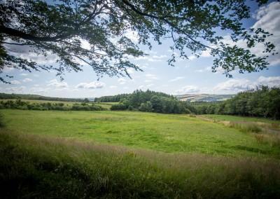 Sheffield Woodland View 5
