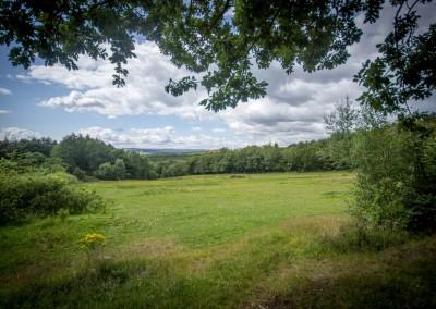 Sheffield Woodland View 4